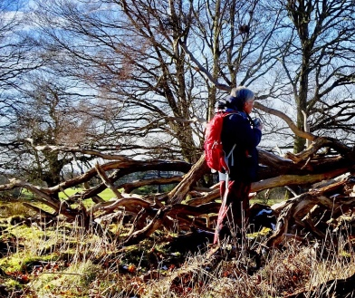 having to investigate a lovely fallen tree